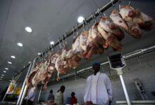 Photo of السودان..انفراجة في صادر اللحوم المذبوحة