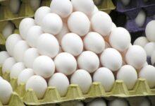 Photo of إفتتاح مشروع دواجن البيضة الذهبية بالنيل الأبيض